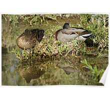Sleeping Ducks Poster