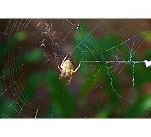 spider weaving web Photographic Print