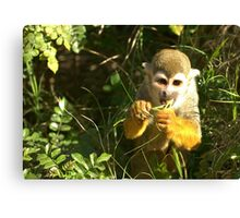 Spider Monkey on Monkey Island Canvas Print