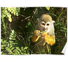 Spider Monkey on Monkey Island Poster