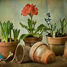 Potting on by Mandy Disher