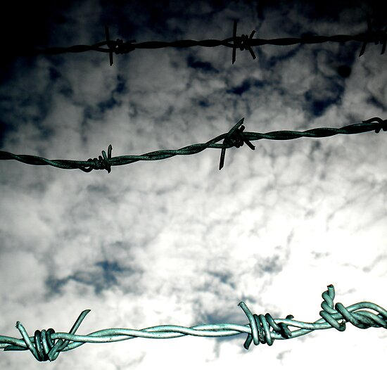 Barbed II by Josephine Pugh