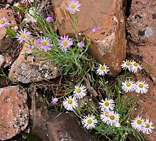 Moab Flowers 2 by Kim Barton