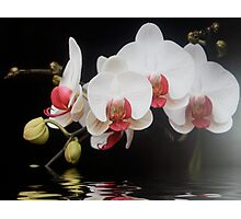 white and pink orchid flooded Photographic Print