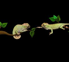 Wanna Be Friends? - Baby Chameleons by pnwthings