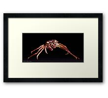 Crab: A Portrait Framed Print