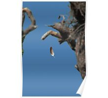 FLOATING BALD EAGLE FEATHER Poster
