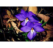 violets Photographic Print