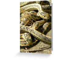 Reptile Ruckus Greeting Card