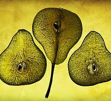 Textured Pears by Susie Peek
