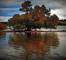The Dreaming Tree by imagesbylori