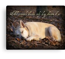 All animals dream Canvas Print
