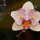 Orchid II by Misti Love