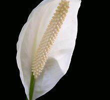 Peace Lily - Close up by Jennifer Sands