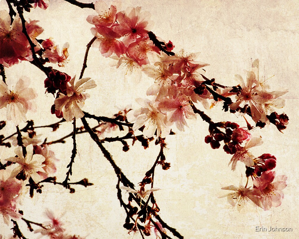 Vintage Cherry Blossoms by Erin Johnson