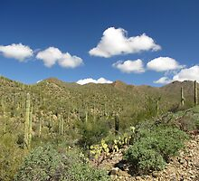 Sonoran Scenery Series ~ 6 ~ by Kimberly Chadwick