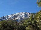Sonoran Scenery Series ~ 7 ~  Madera Canyon by Kimberly Chadwick