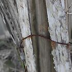 Rusted White Fence by William Herpel
