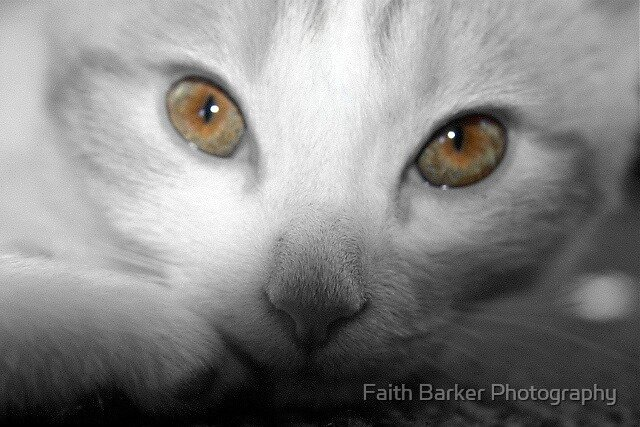 The Eyes Have It by Faith Barker Photography