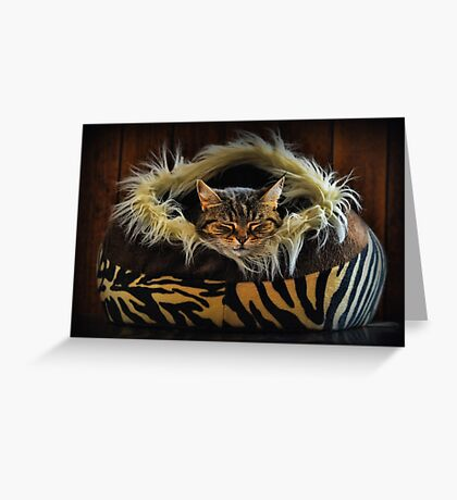 If you want to learn how to relax - study a cat! Greeting Card