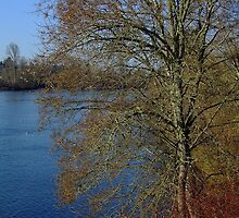 Willamette River in Winter by Dave Tunstall