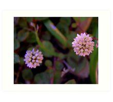 Mace Flower 2 Art Print