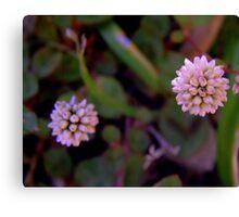 Mace Flower 2 Canvas Print