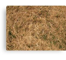 Dry grass in a meadow Canvas Print