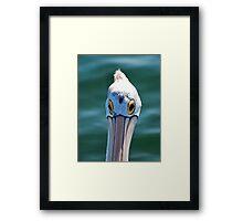 Look me in the eye Pelican Framed Print