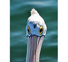 Look me in the eye Pelican Photographic Print