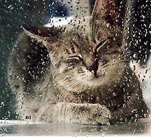 SUMMER RAIN AND... I'M BORED by uliu