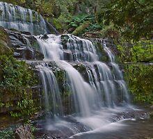 Liffey Falls, Tasmania by Claire  Farley