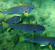 Sweetlips! by bazcelt