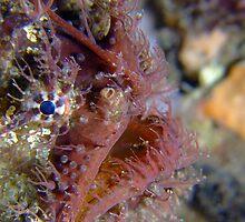 Tassled Anglerfish by Sean Elliott