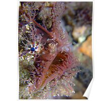 Tassled Anglerfish Poster
