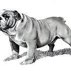 Bulldog by Joyce