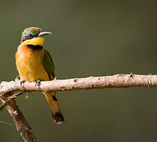 Little Bee Eater by Sue Earnshaw