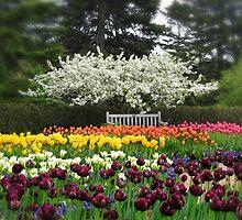 Tulip Garden by Jessica Jenney
