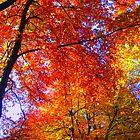 Red Orange Trees by ciaobella2u