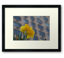 Daffodils in the City Framed Print