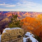 Canyon Light by Jan Cartwright
