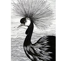 Crowned Crane Photographic Print