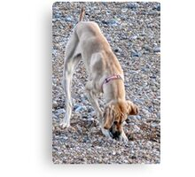 Digging For Britain Canvas Print