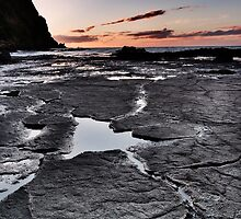 Natures Pavement by Claire Walsh