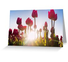 Pink Tulips at Sunset Greeting Card