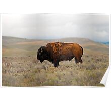 Iconic Image - American Bison Poster