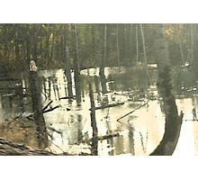 in the swamp Photographic Print
