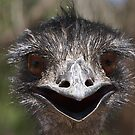 EMU by markosixty6
