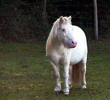 Little grey pony by Caroline Anderson