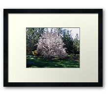 Plums in the Making Framed Print